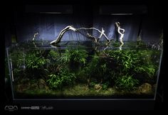 aquascaping / planted tank