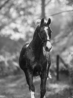 #horse #portrait