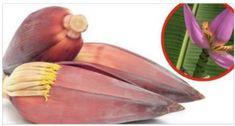 La flor del banano o plátano ayuda a curar problemas en el útero. Descubre como!