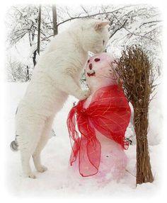kitty kissing a snowman :) :) :)