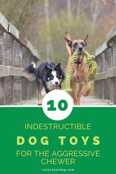 The Top 10 Best Indestructible Dog Toys For Aggressive Chewers - Tutor Your Dog . The Top 10 Best Indestructible Dog Toys For Aggressive Chewers – Tutor Your Dog % Cute Dog Toys, Best Dog Toys, Best Dogs, Cute Dogs, Miniature Dog Breeds, Outdoor Dog Toys, Durable Dog Toys, Dog Kennel Cover, Dog Training