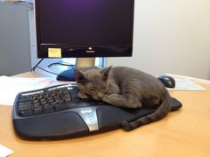 Sleep is much more important than work. (Submitted By: JUDY LAN)