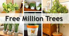 #Nurserylive is giving away 1 Million #Plants & #Seeds #Free. Order free plant today & make your living healthy, creative & stress-free.