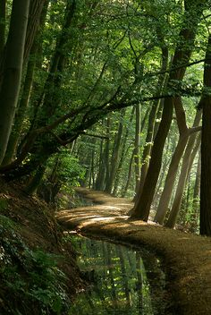 Walkway in the woods - Sintjansberg- Molenhoek  The Netherlands