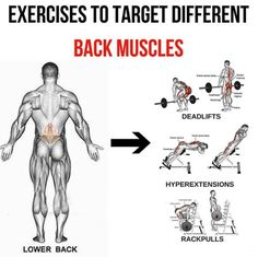 Lower Back - Exercises To Target Different Back Muscles 2