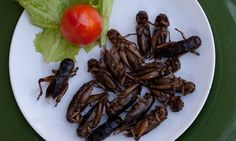 Last week's insect conference: If we're going to establish #entomophagy a little more firmly in the West, we ought to extract insects from the realm of 'bizarre food'