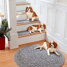 Rowan Embossed Washable Area Rugs - possible entry rug (puppies not included.