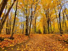 Local Love Ontario: Where to Eat & Wander with your Family - Best spots to see Ontario's Fall colours foliage | Family friendly hikes | Best Provincial Parks for families | All Trails