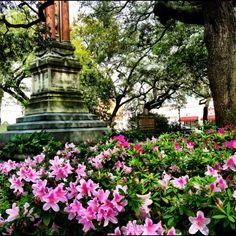 Wright Square - Springtime in Savannah