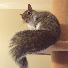 Jill, a lovely squirrel in Louisiana that was rescued after she fell from her nest during a hurricane, has become an Instagram celebrity thanks to her adorable antics.