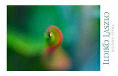 Contact Me | Ildiko Laszlo Photography World Of Color, Fine Art Photography, Close Up, Photographs, Romantic, Abstract, Image, Summary, Photos