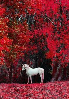 Horse in autumn colors Cute Horses, Pretty Horses, Horse Love, Beautiful Horse Pictures, Most Beautiful Horses, Cute Baby Animals, Animals And Pets, Beautiful Creatures, Animals Beautiful