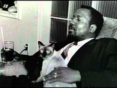 Thelonious Monk and a Siamese Cat of Nica Rothschild Baby Tigers, Tiger Cubs, Tiger Tiger, Bengal Tiger, Albert Schweitzer, Thelonious Monk, Cheetah Animal, Unique Cats, Good Buddy