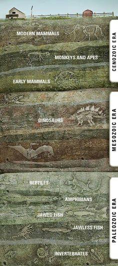 Paleozoic Mesozoic Cenozoic
