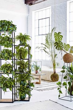 Plants and Plant Stands as room dividers