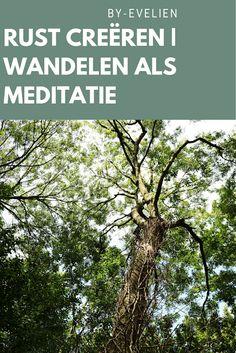 Goedemorgen! Er start een nieuwe week. Sinds kort ben ik begonnen met mediteren, echter doet het zijn vruchten al afwerpen. Ik ben dol op de natuur, en ik koppel dit graag aan meditatie. Vandaag ga ik dieper in op wandelen als meditatie. Neem je een kijkje? Plants, Plant, Planets