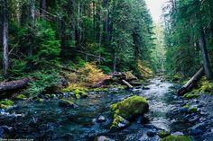 Обожаю такие вот речки в лесу