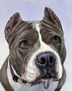 Pitbull Pictures, Dog Pictures, Animal Paintings, Animal Drawings, Wildlife Art, Dog Portraits, Pitbulls, Dog Art, Illustrations