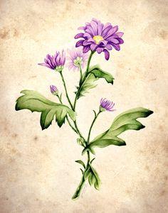 Chrysanthemum morifolium by Equal-Night.deviantart.com on @deviantART
