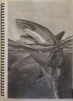 realistic shark drawing in pencil - Pesquisa Google