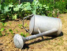 """Combatir Mosca Blanca: Se recomienda la aplicación insecticida """"anticochinillas""""; porque las cochinillas y la mosca blanca son de la misma familia. Para mejorar la acción, se puede mezclar el """"anticochinillas"""" con un insecticida polivalente."""