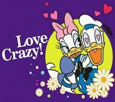 If it's not passionate and crazy. love it's not real. Love is not dull and boring love is a flame 🔥 Donald Duck Characters, Disney Cartoon Characters, Disney Films, Cartoon Art, Disney Duck, Disney Love, Disney Art, Walt Disney, Donald Love