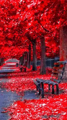 Outdoors Discover Natur is the god Fall Pictures Nature Pictures Beautiful Pictures Photo Background Images Photo Backgrounds Beautiful Nature Wallpaper Beautiful Landscapes Picsart Background Autumn Scenery Studio Background Images, Photo Background Images, Photo Backgrounds, Wallpaper Backgrounds, Beautiful World, Beautiful Places, Beautiful Pictures, Beautiful Park, Amazing Places