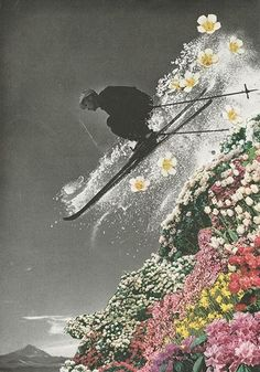 Skiing, Flowers, Photography, Art