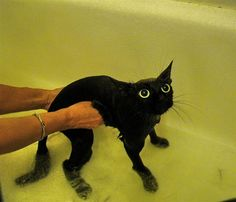 15 Reasons Why Wet Cats Are Hilarious 24 - https://www.facebook.com/different.solutions.page