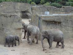 Elefantenpark im Zoo #Koeln http://www.ausflugsziele-nrw.net/koelner-zoo/