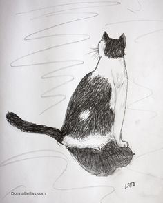 Watching, Waiting II A black and white #cat sits waiting and watching.  #Art is a pencil #sketch #drawing of a black and white cat.