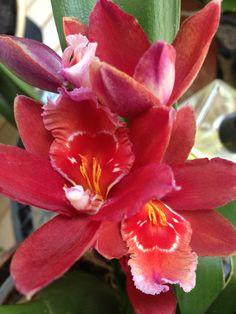 Wow! Las orquídeas en casa dando flores!!! Las amo!!! #conceptonatura #armonizandoconflores #floresconintencion www.fengshui-monicakoppel.com.mx Armonizando con flores!!
