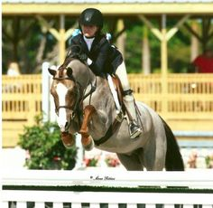 I have an unnatural obsession with Welsh hunter ponies, especially the little roan ones. I want ALL of them!