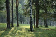 Forest Daylight - photo-wallpaper