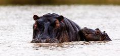 Hypo mother and calf by Martin Fromer on 500px