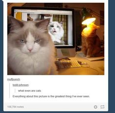 I want to pin every one of these! you have to check out the whole article: 21 Times Tumblr Told The Truth About Cats