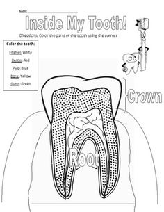 Parts of a Tooth Coloring and Vocabulary Page