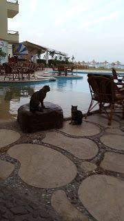 We Love Animals and Travel: Hotel Magic Beach at the  Red  Sea  in Hurghada