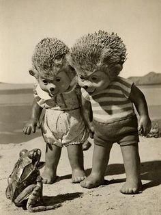 Hedgehogs, ganging up on a frog