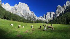 Val Canali - Parco Paneveggio-Pale di San Martino - TR - Trentino Alto Adige - Italy