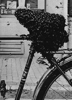 Meret Oppenheim (1913-85). Bicycle Seat Covered with Bees (found object), 1952.