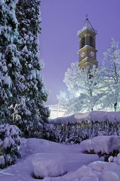 in a cold winter night - Casabianca, Piedmont, IT -  By DarkFrame....what a beautiful night sky... and the towering snow-covered evergreens!