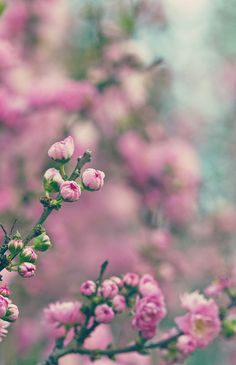 Lotsa Blossoms by aussiegall, via Flickr