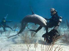 Apesar da proximidade, o mergulhador garante que nunca pode estar 100% confiante, e afirma que respeita a selvageria deles Foto: Caters / The Grosby Group