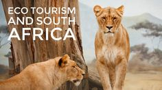 Ecotourism in South Africa at Gondwana Game Reserve…
