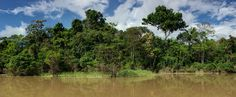 An Amazon Tributary in Colombia