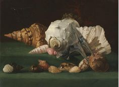 Artist Unknown (French School) - Shells, 19th cen.
