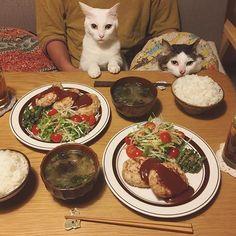 naomiuno ハンバーグ♩ 昨日、お友達夫婦が静岡の「さわやか」の食べてたから…。ほんで今日、利用者さん達がお昼に食べてたから…。 食べたくなってん…ハンバーグ❤︎ ハッチャンのお顔の机にのっけ方がかわいい❤︎ 宇野家のハンバーグは、鶏(鶏多め)×豚の合挽き。だから色白めハンバーグ。お豆腐を足す時もある。 #八おこめ #ねこ部 #cat #ねこ #八おこめ食べ物 #ハンバーグ  2017/01/23 23:51:23