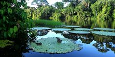 Uncover Colombia - Colombian Amazon Tour
