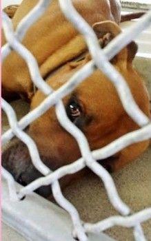 CALIFORNIA: Alvin - Carson Shelter, Gardena, California https://www.facebook.com/171850219654287/photos/a.219655291540446.1073741846.171850219654287/392527484253225/?type=1